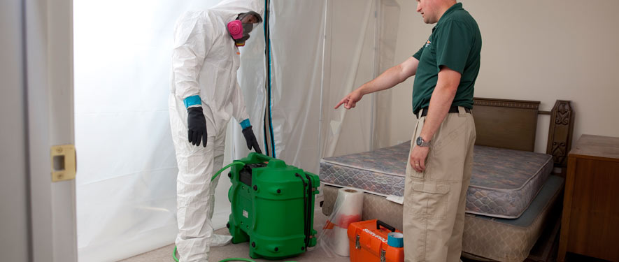 Palm Harbor, FL mold removal process